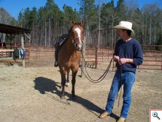 Gelding Quarter Horse