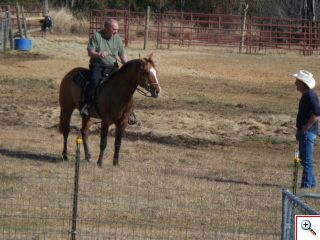 Quarter Horse For Sale